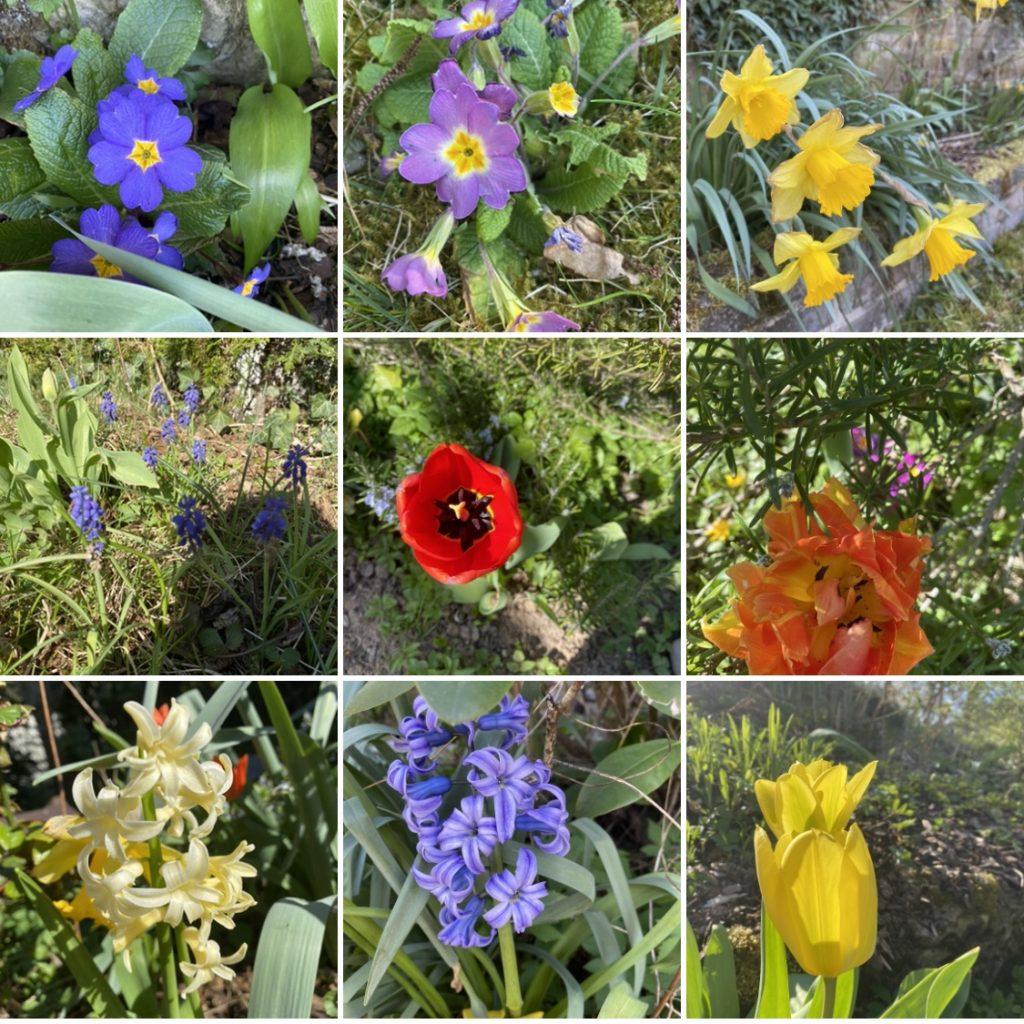 Collage aus 9 bunten Frühlingsblumen im Garten - fotografiert von meinem Großen