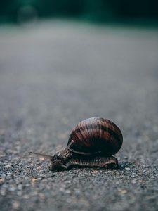 Abenteuer können laut und leise sein, groß und lebensverändernd oder klein und unscheinbar. (Bild von Elina Emurlaeva)